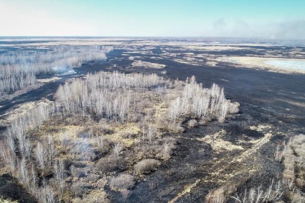 В районе уже выжжены огромные территории