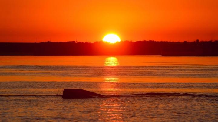 Мошка с комарами заслоняли рассвет: фотограф запечатлел ярко-оранжевое волгоградское утро
