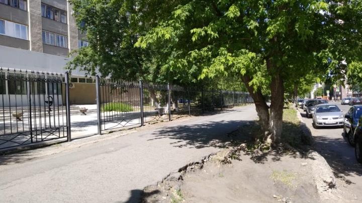 «Пересадке не подлежат»: в Кургане для постройки новой дороги у больницы снесут клены