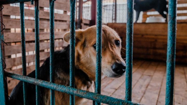 В пермском приюте для животных внезапно погибли 130 собак, учреждение это скрыло