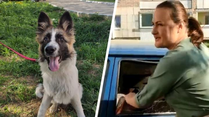 «Собачка чуть не задохнулась!» На Урале зоозащитница топором разбила окна в машине, чтобы спасти пса