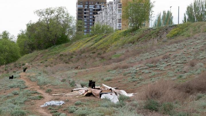 В Волгограде берег Волги хотят застроить многоэтажными домами