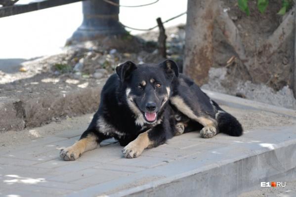 Горожане уже сообщили о бездомных животных в службу отлова
