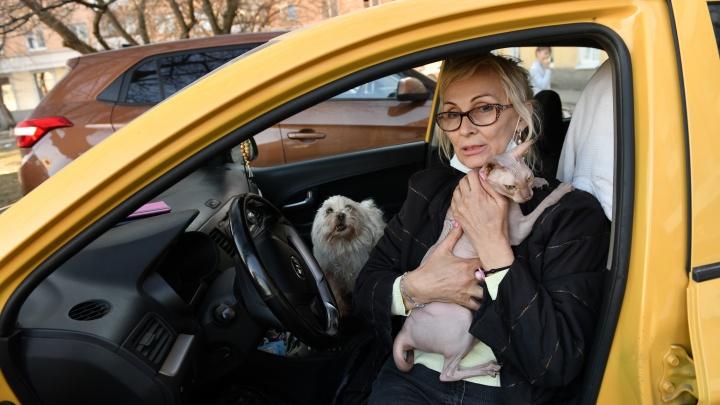 «Пришли и начали долбиться в дверь». История екатеринбурженки, которая живет в машине с четырьмя кошками и собакой