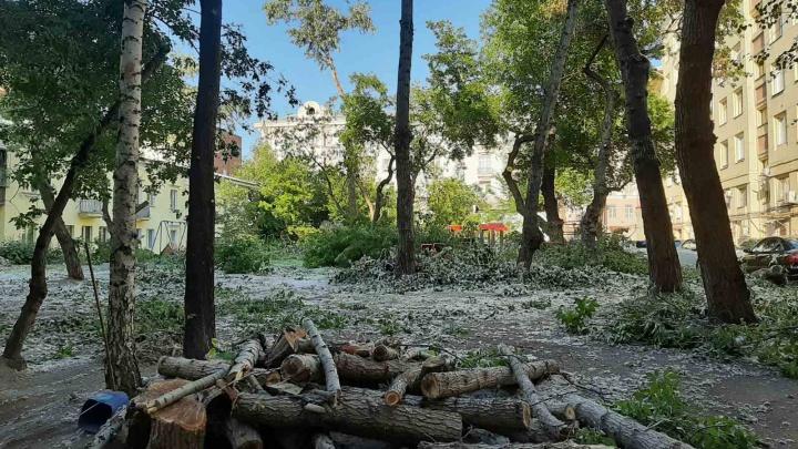 Уничтоженные деревья во дворе в центре Челябинска оценили в 13 тысяч рублей