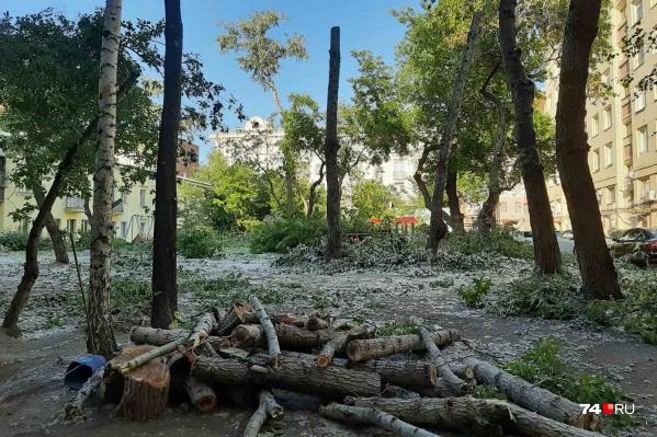 """Интересно, сколько простоят эти деревья-столбы? <a href=""""https://74.ru/text/gorod/2021/06/09/69959468/"""" class=""""_ io-leave-page"""" target=""""_blank"""">Варварскую обрезку</a> провели в то время, когда это категорически запрещено. И можно ли вообще их называть теперь деревьями"""