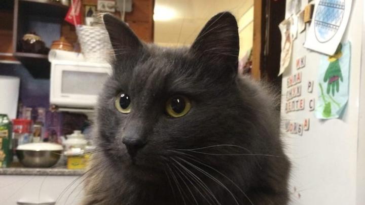 «Я его сразу узнала!»: спустя пять месяцев нашелся кот Кузя, сбежавший из самолета в Ярославле