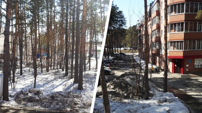 Новосибирцы восстали против вырубки сосен и раскрыли хитрую схему, по которой продали участок с лесом