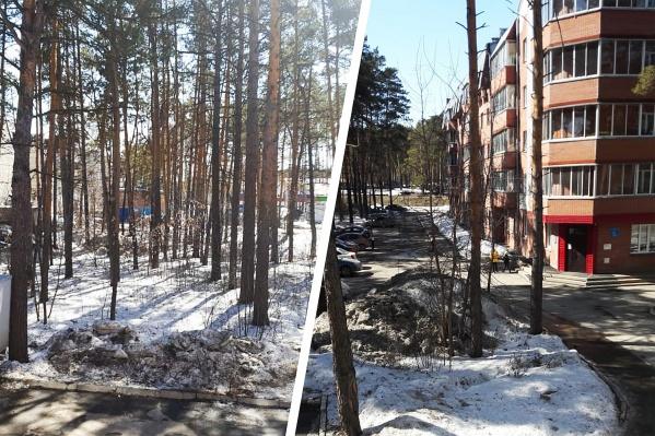 Лесной участок (слева) и стоквартирный дом в нескольких метрах от многометровых сосен
