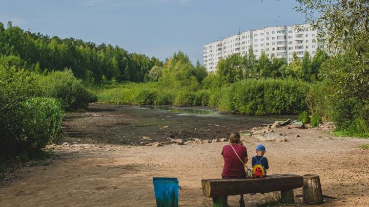 В Закамске обмелело Утиное болото. Местные жители переживают, что птицам негде плавать