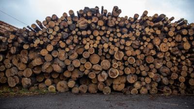 Кузбасские власти ищут того, кто вырубит 7,6га леса. Рассказываем, в каком районе не будет деревьев