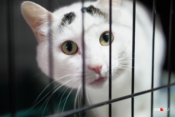 Узнали, сколько стоит обследование кошки, кто такие «дикобразы» и почему важно познакомиться с животным, прежде чем забирать его домой