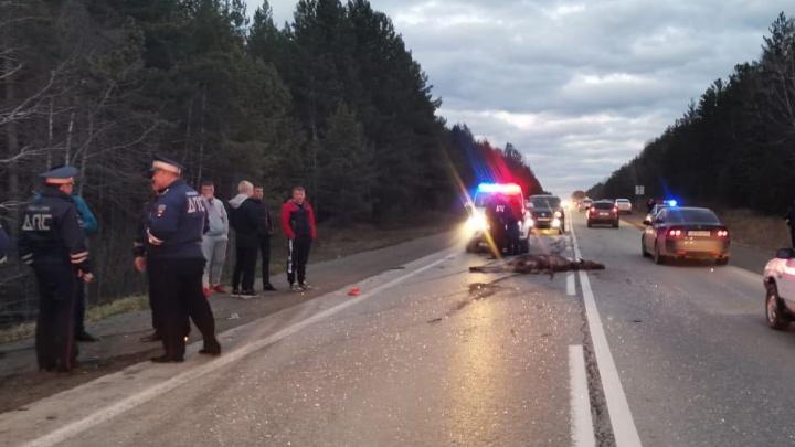 На Режевском тракте «Москвич» сбил лося и столкнулся со встречным авто