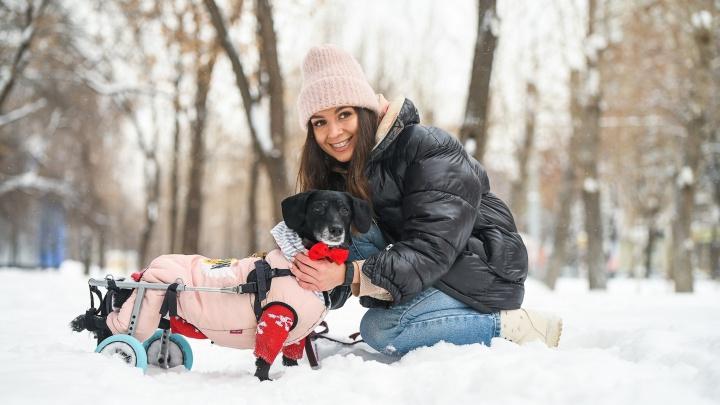 Собака кричала от боли: история таксы с парализованными лапами, которая стала звездой «ТикТока»