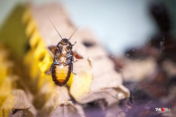 Главное — не оставлять в квартире еду и воду, до которых может добраться таракан