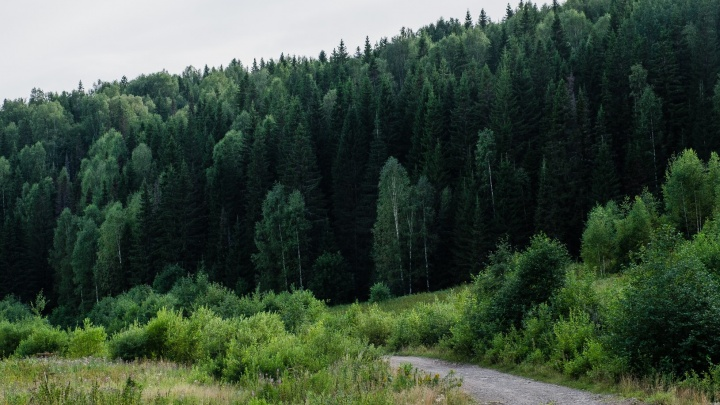 Под Кишертью заблудился пожилой мужчина. Выбраться из леса ему помогли подсказки по телефону от спасателей