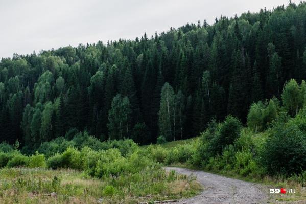 Самостоятельно выйти из леса мужчина не смог, только с помощью подсказок