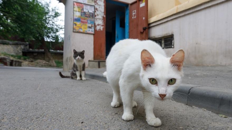 В Волгоградской области бешеный кот набросился на ребенка