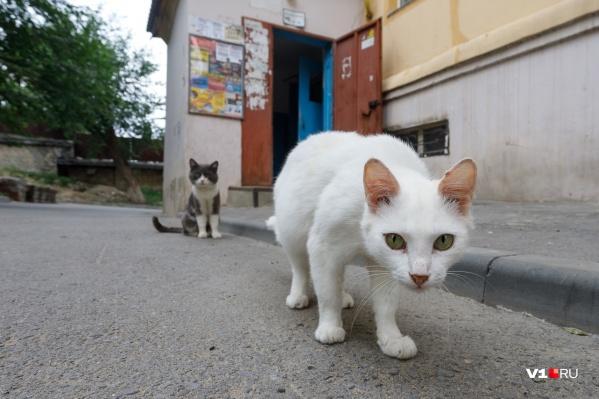 Жертвой бешеного кота стала жительница Чернышковского района