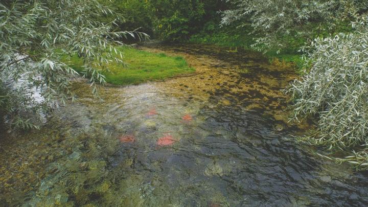 В Перми будут судить отца утонувшей семилетней девочки: они вместе купались в реке