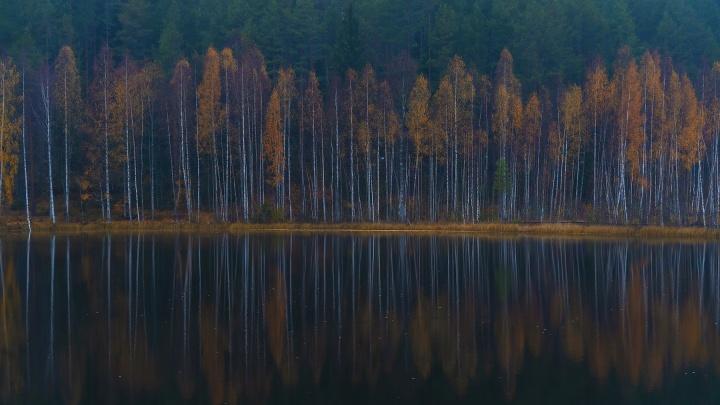 Ради чего ехать осенью в Кенозерье: фотопрогулка по заповедным местам