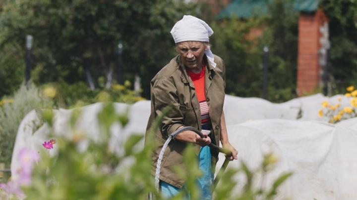 Вы всё еще можете его спасти: разбираемся, как сохранить урожай после града и ливней