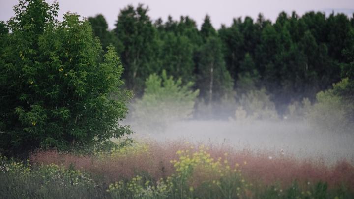 Власти Кузбасса сделали участок сельхозземель особо охраняемой территорией. Объясняем, что это значит