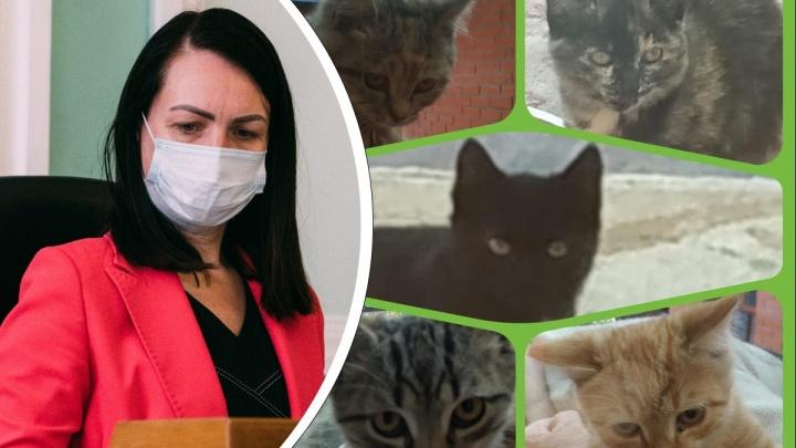 Бывший мэр Оксана Фадина в «Инстаграме» решила раздать пятерых котят
