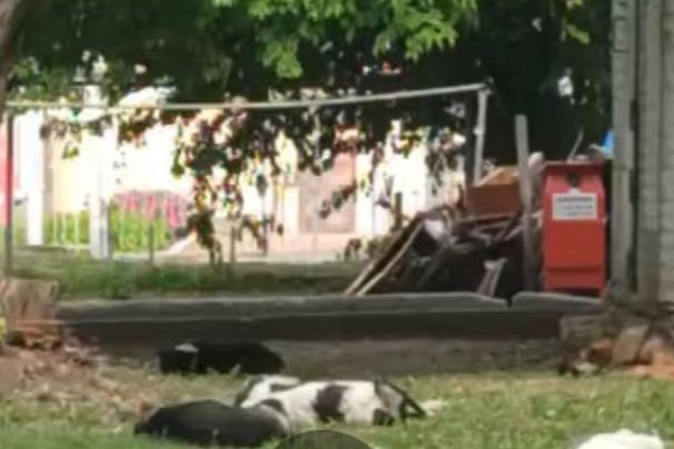 «Примите меры»: жительница Уфы пожаловалась на стаю собак, которая «накинулась на ребенка»