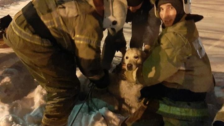 Омские пожарные спасли собаку, которая провалилась в глубокий колодец с водой