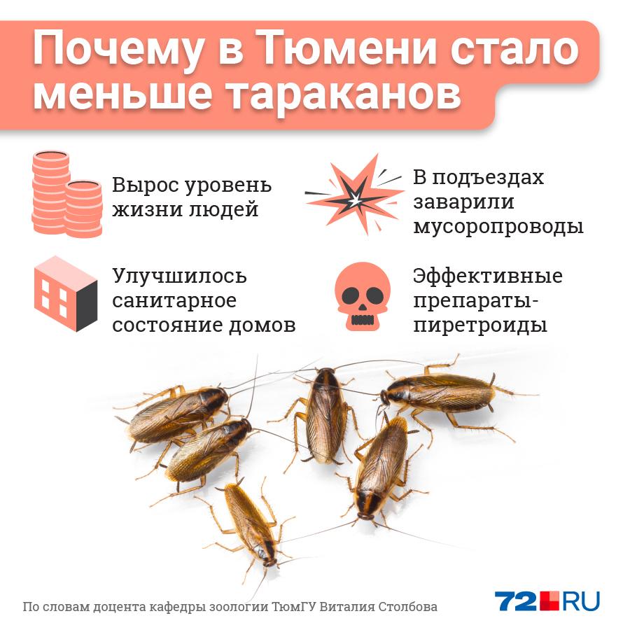 Родина рыжих тараканов — Юго-Восточная Азия, там они могут жить в дикой природе. В Сибири таракан выживает только вместе с человеком