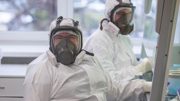 В Новосибирской области выявили индийский штамм коронавируса