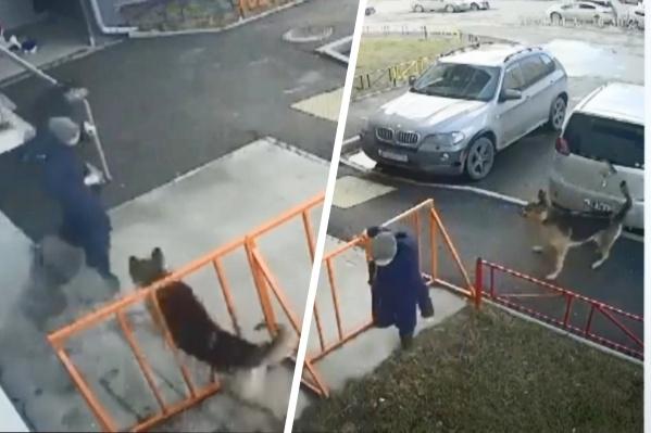 Собака побежала за детьми и начала бросаться на них