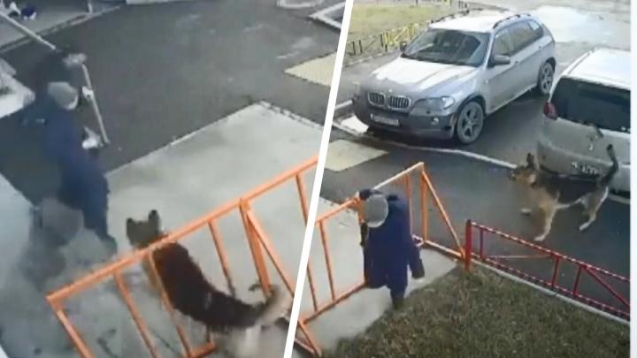 «Хозяйка рухнула на землю и выпустила поводок». В Первоуральске огромная овчарка набросилась на детей. Видео