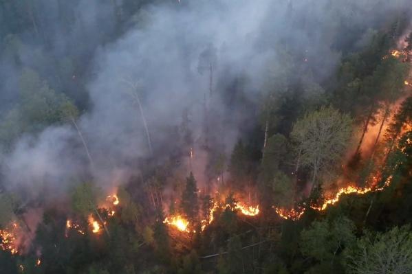 Лесные пожары зачастую охватывают большие площади
