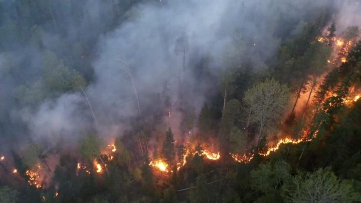 Огненное пекло: лесной пожар в Северодвинском лесничестве попал на видео