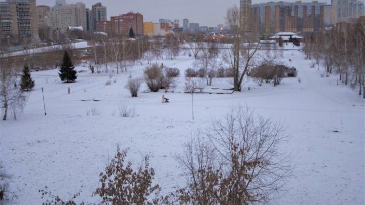Школу рядом с «Сибирь-Хоккайдо» в Новосибирске хотят построить на частные деньги