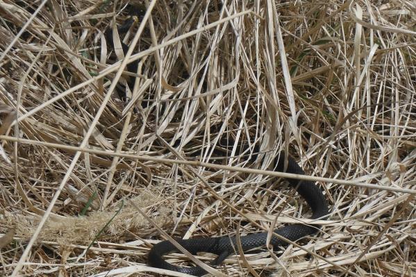 Апрель — время пробуждения змей