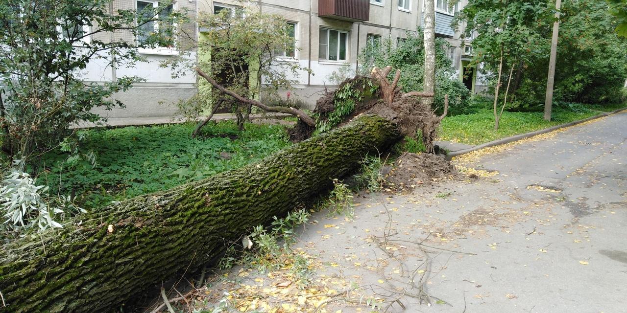 Дерево на Гранитной улице