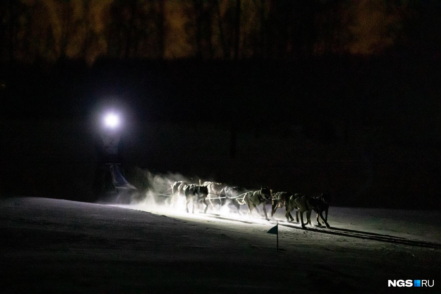 В соревновании приняли участие семеро спортсменов со своими собаками