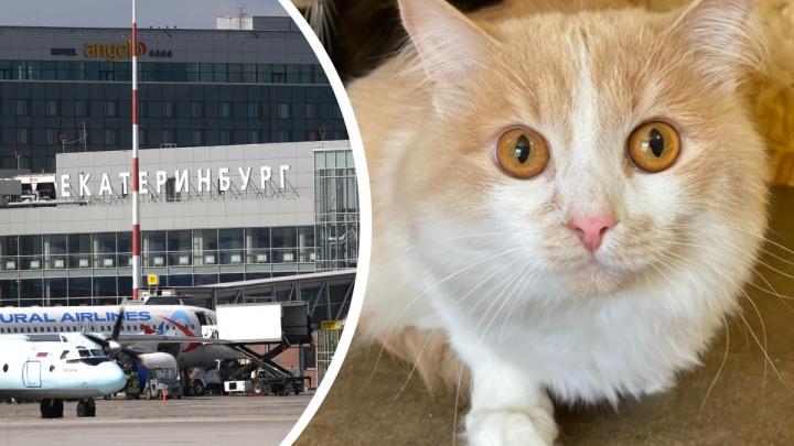 «За такое будет предусмотрен штраф»: депутат Госдумы — о коте, которого хозяйка бросила в Кольцово