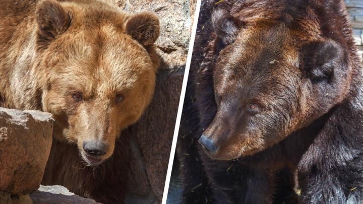 Возбуждено уголовное дело об отравлении медведей в челябинском зоопарке. Кто попал под подозрение