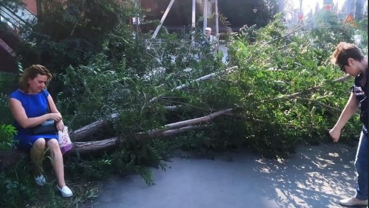 Неподалеку от Музтеатра на женщину упало дерево