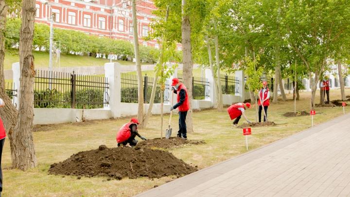 В Струковском парке высадили первую в городе аллею красных дубов