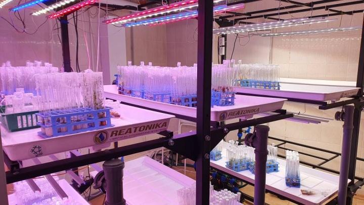 Вырастить растения в сити-фермах и изучить космические снимки: в Сургуте для школьников открылась экостанция