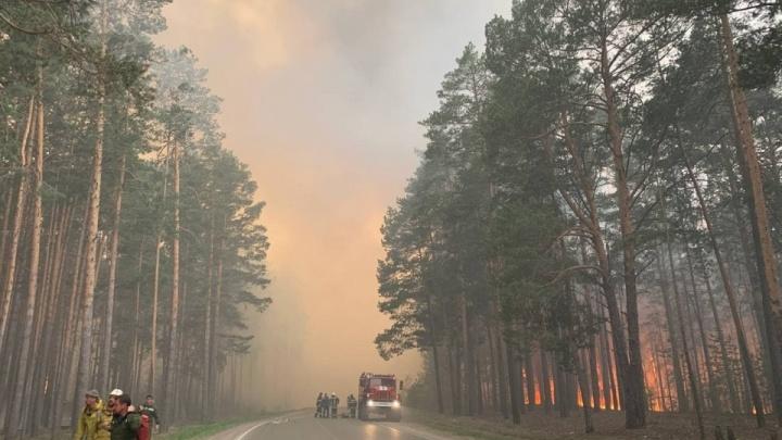 Куда звонить, если заметил лесной пожар? А если попал в плен огня? Полезная шпаргалка для тюменцев