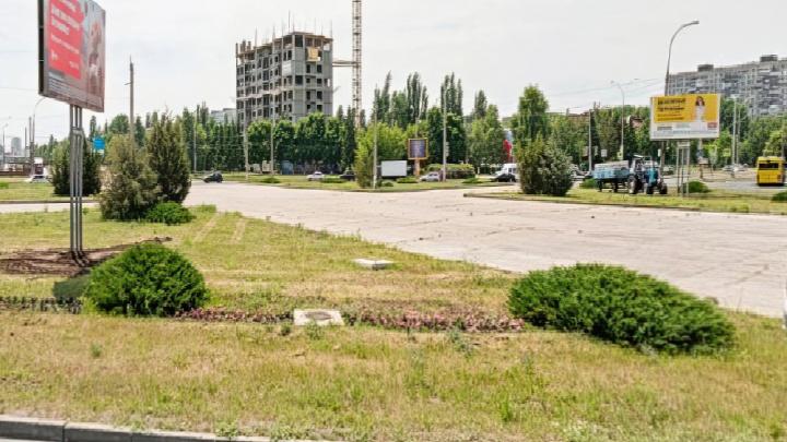 Власти Тольятти посадили цветы на 4 миллиона рублей. Вот где расположены цветники