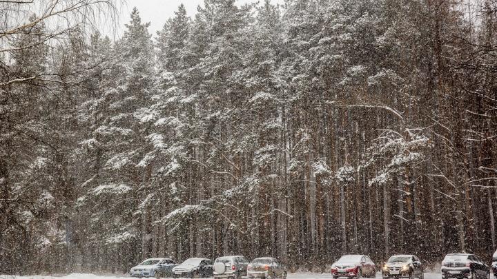 «Выше нормы»: синоптики спрогнозировали, как долго в Ярославле задержится оттепель