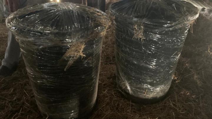 Под Волгоградом УФСБ России обезвредили наркоторговца. Мужчина вырастил 21 килограмм конопли