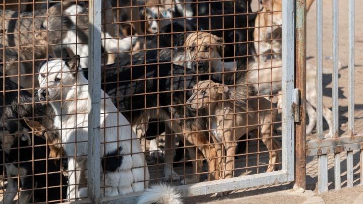 «Нам проще сжигать, чем хоронить»: в горпитомнике Волгограда открещиваются от братских могил биркованных собак